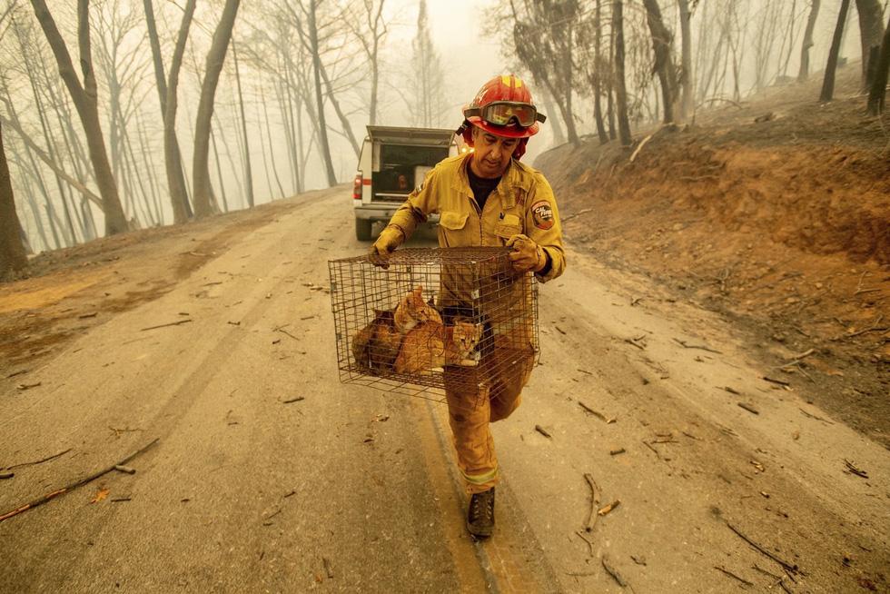 Đáng thương cảnh động vật cháy xém sau cháy rừng ở California - Ảnh 1.