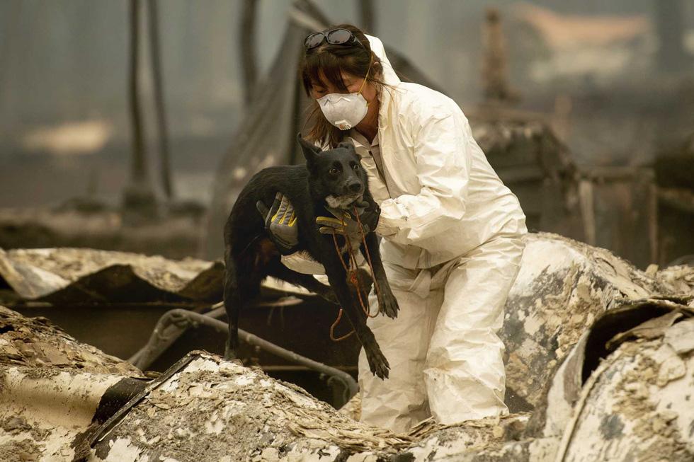 Đáng thương cảnh động vật cháy xém sau cháy rừng ở California - Ảnh 12.