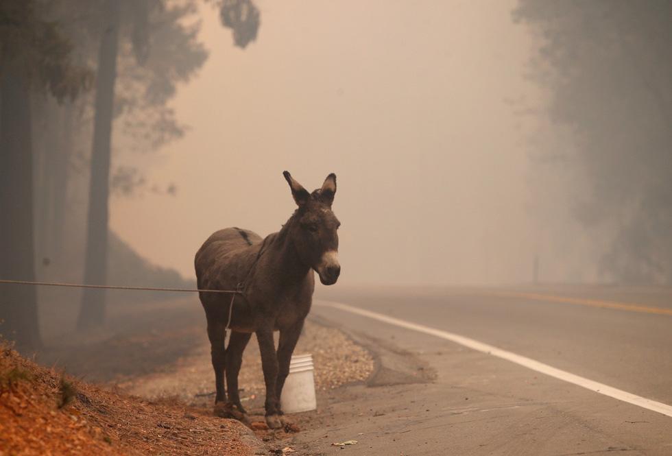 Đáng thương cảnh động vật cháy xém sau cháy rừng ở California - Ảnh 13.