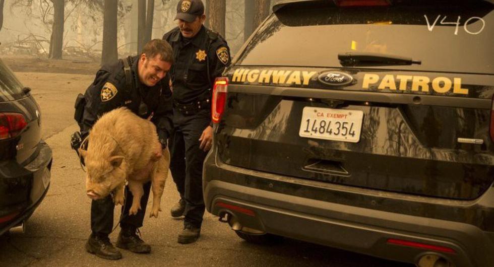 Đáng thương cảnh động vật cháy xém sau cháy rừng ở California - Ảnh 14.
