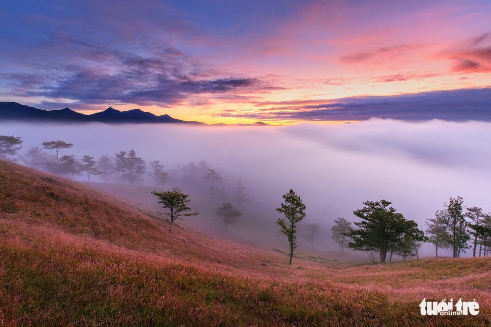 Ngủ đêm giữa rừng để ngắm cỏ hồng lúc bình minh - Ảnh 3.