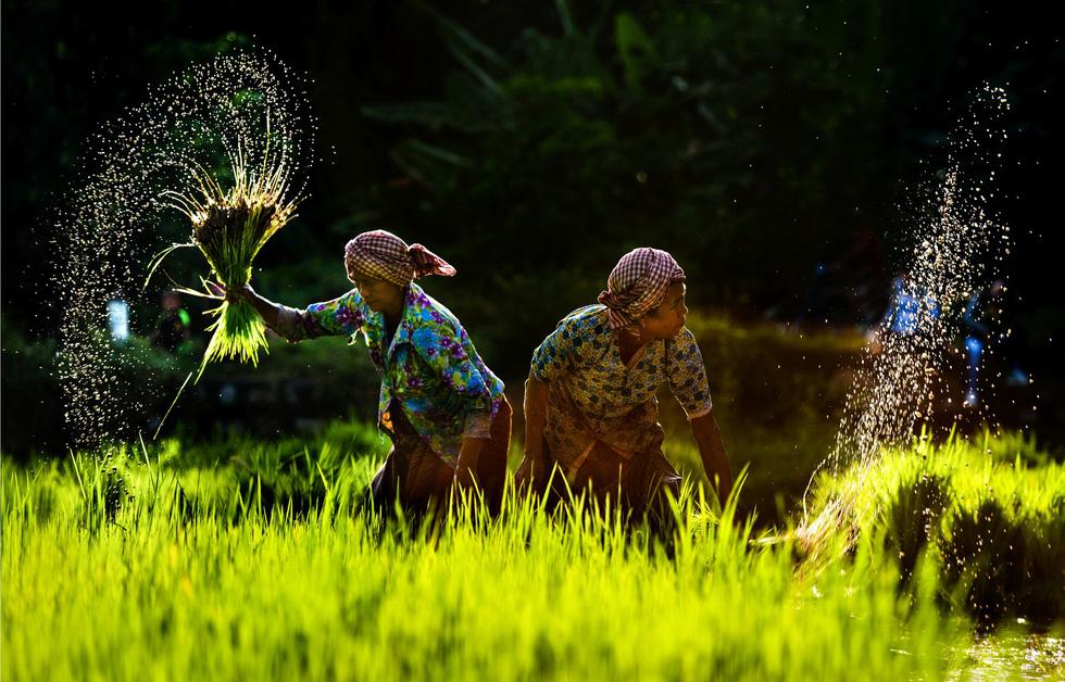 Ngây ngất với thiên nhiên và đời sống người Việt  qua ảnh - Ảnh 5.