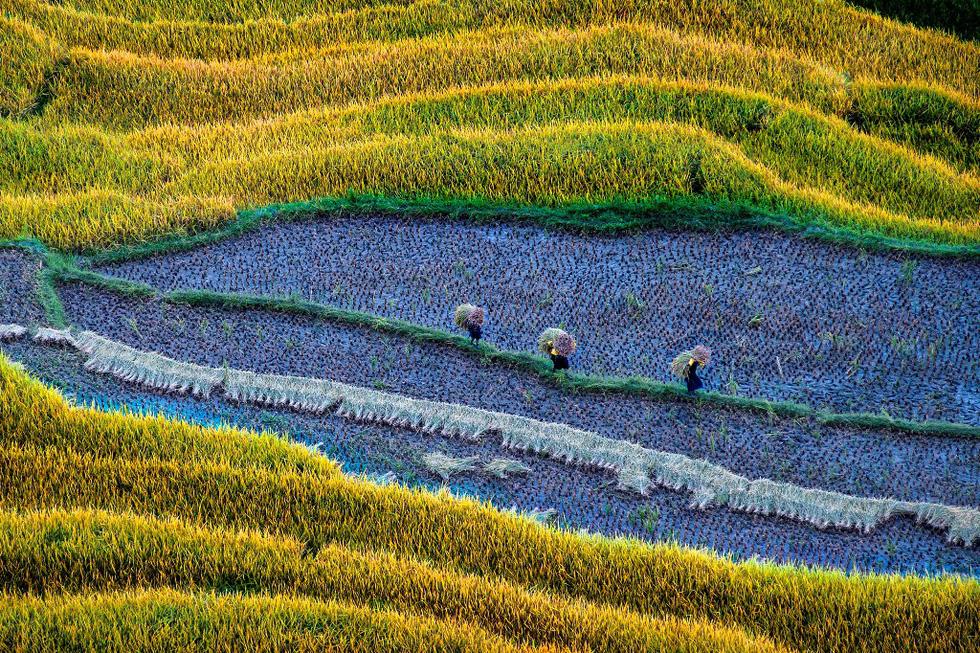 Ngây ngất với thiên nhiên và đời sống người Việt  qua ảnh - Ảnh 9.