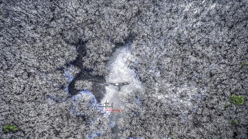 Đông về, rừng Rú Chá đẹp ma mị  - Ảnh 1.