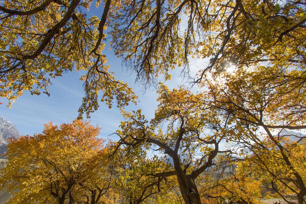 Huyền thoại mùa thu ở Hunza - miền Bắc Pakistan - Ảnh 10.