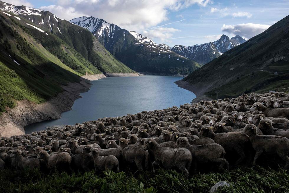 Theo chân người chăn cừu trên vùng đồng cỏ núi Alps - Ảnh 11.