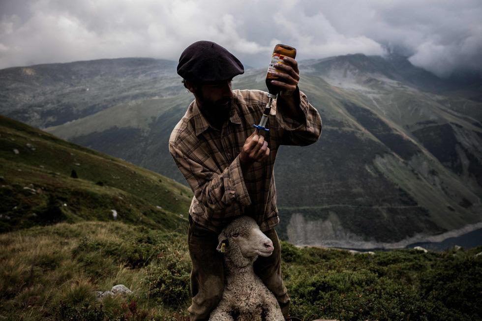 Theo chân người chăn cừu trên vùng đồng cỏ núi Alps - Ảnh 13.