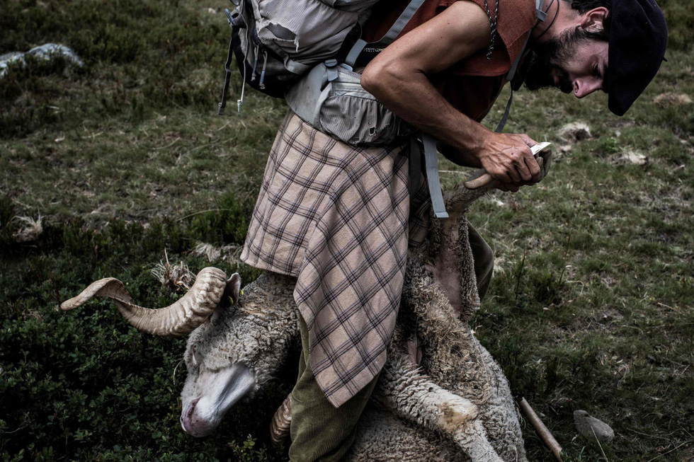Theo chân người chăn cừu trên vùng đồng cỏ núi Alps - Ảnh 14.