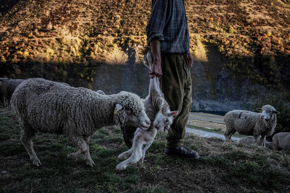 Theo chân người chăn cừu trên vùng đồng cỏ núi Alps - Ảnh 15.