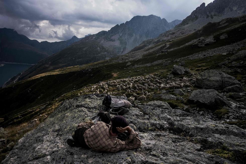 Theo chân người chăn cừu trên vùng đồng cỏ núi Alps - Ảnh 16.