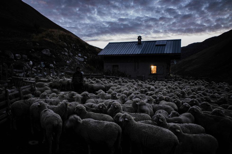 Theo chân người chăn cừu trên vùng đồng cỏ núi Alps - Ảnh 17.