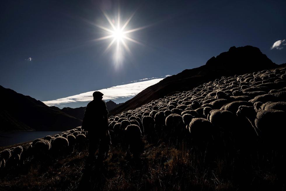 Theo chân người chăn cừu trên vùng đồng cỏ núi Alps - Ảnh 20.
