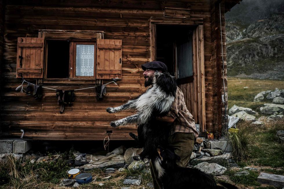 Theo chân người chăn cừu trên vùng đồng cỏ núi Alps - Ảnh 8.