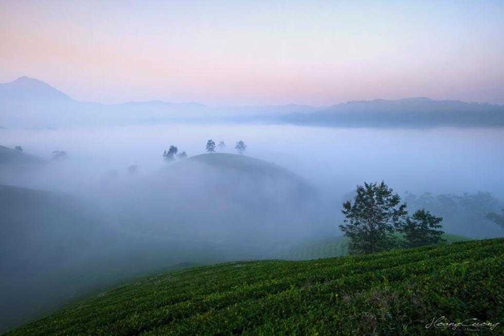 Đồi chè Long Cốc bồng bềnh sương mây - Ảnh 7.