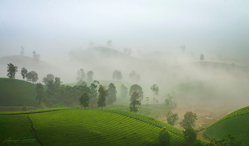 Đồi chè Long Cốc bồng bềnh sương mây - Ảnh 9.