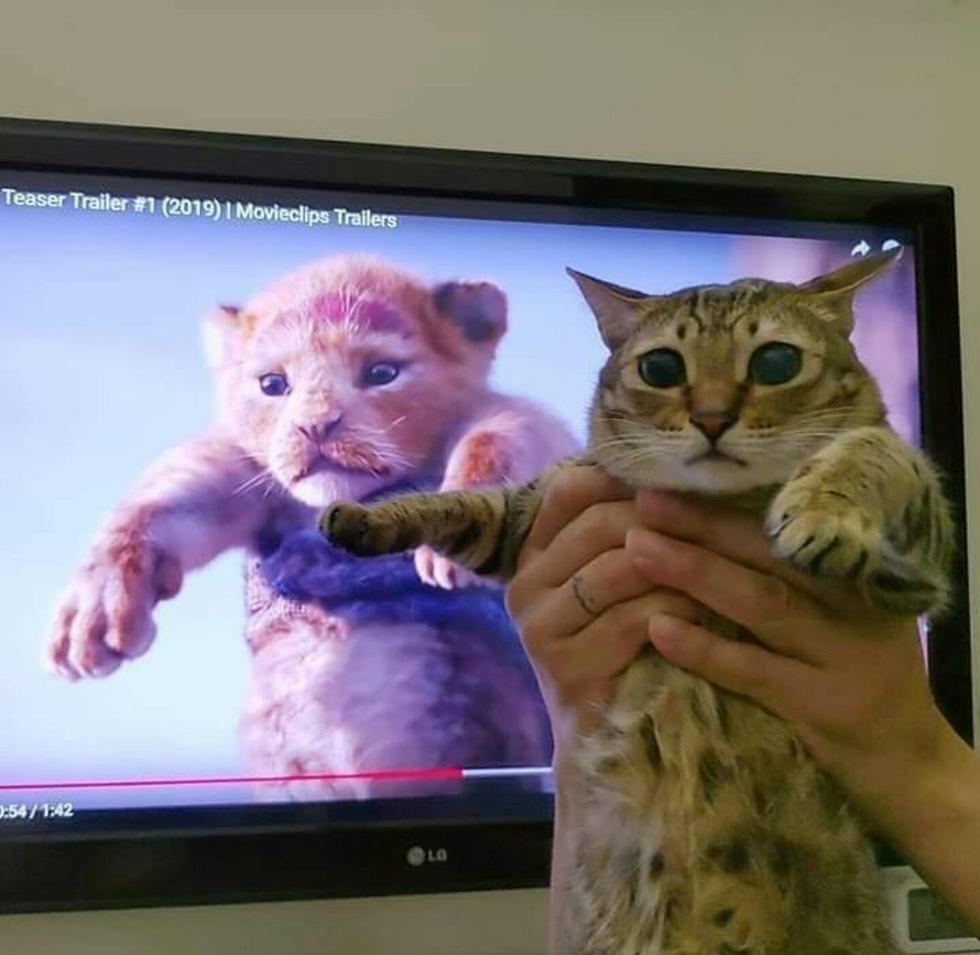Quá mê The Lion King, khán giả chế ảnh Simba phiên bản chó mèo - Ảnh 7.