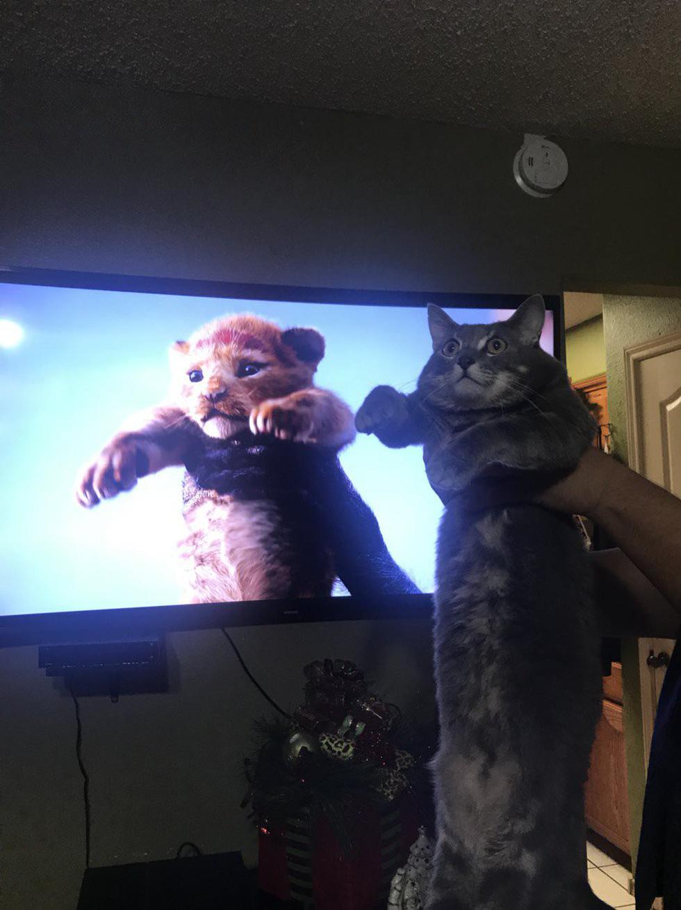 Quá mê The Lion King, khán giả chế ảnh Simba phiên bản chó mèo - Ảnh 11.