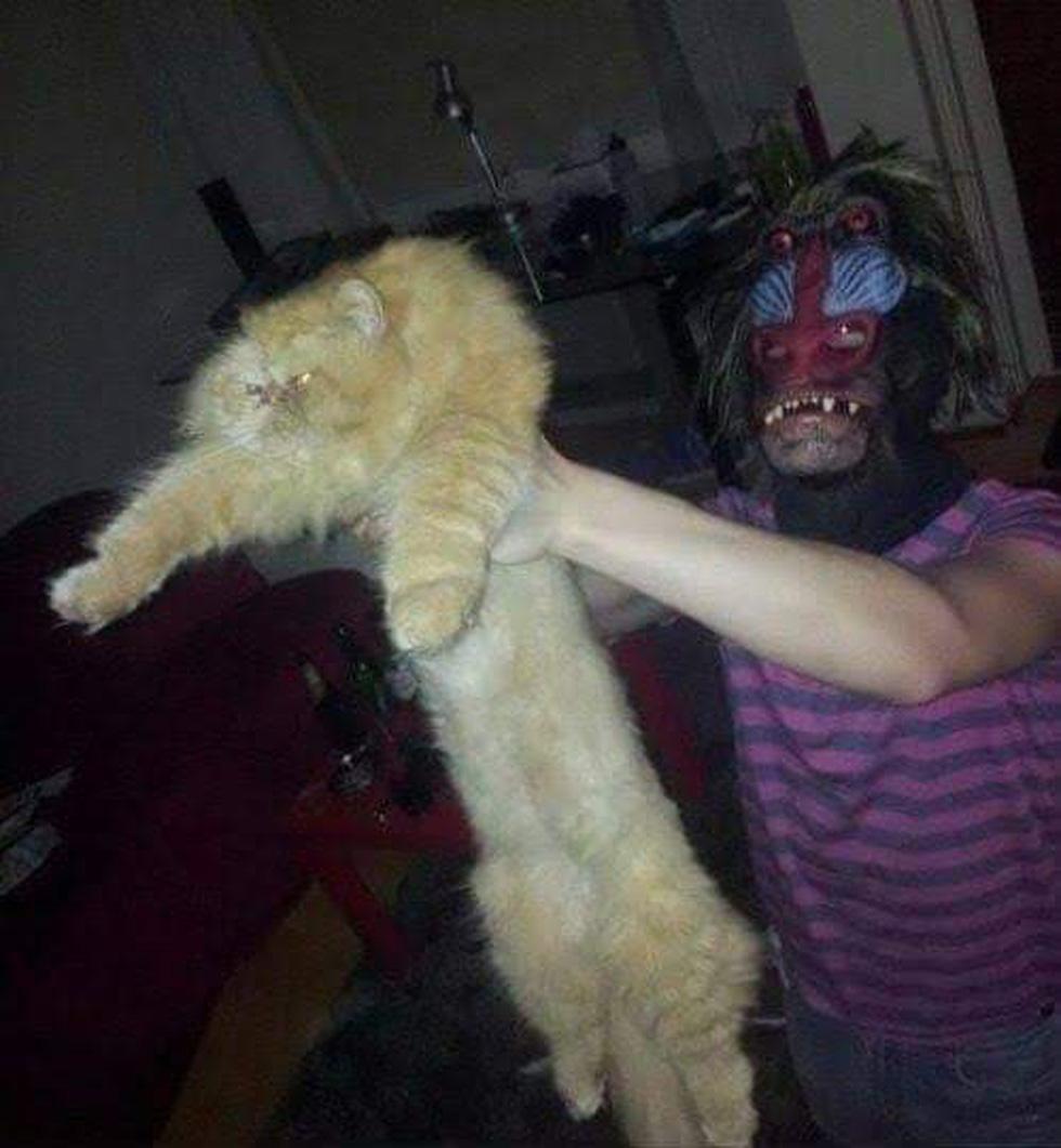 Quá mê The Lion King, khán giả chế ảnh Simba phiên bản chó mèo - Ảnh 12.