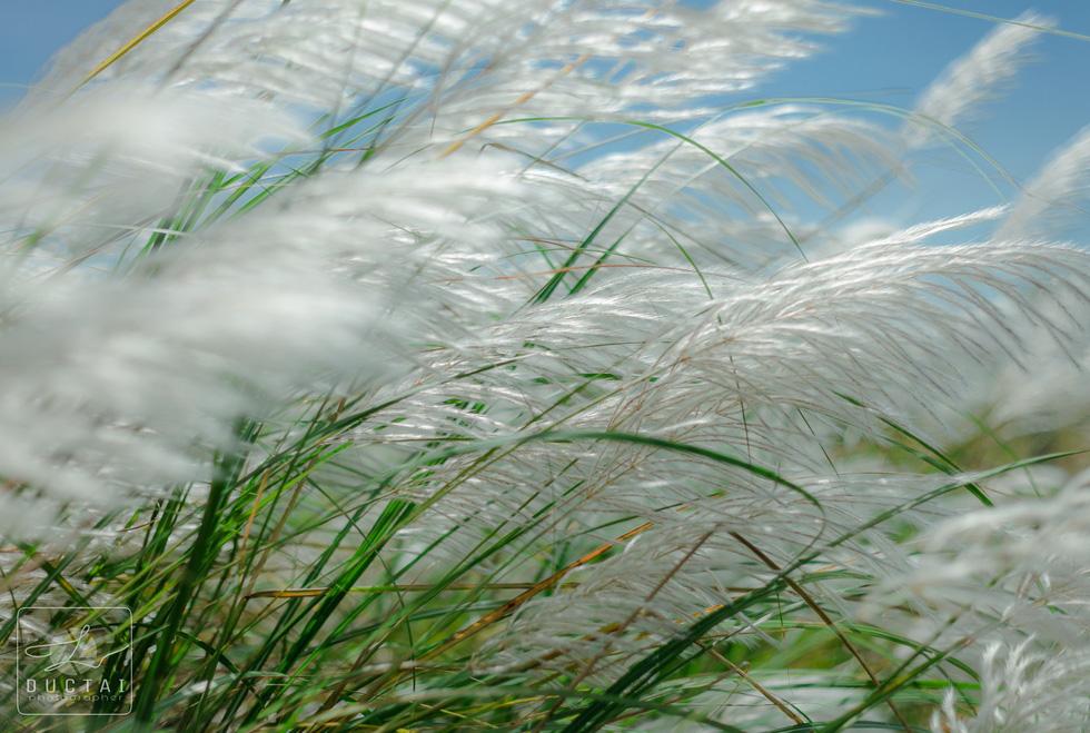 Trai xinh gái đẹp diễn sâu giữa đồng cỏ lau Đà Nẵng - Ảnh 4.