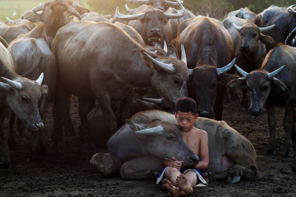 Xem những bức ảnh chạm đến trái tim của cuộc thi ảnh lớn nhất thế giới - Ảnh 6.