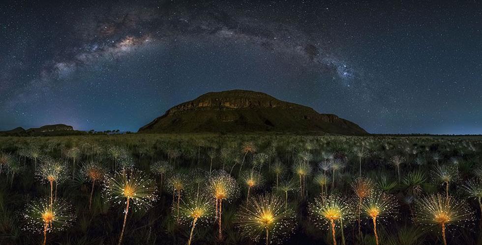 Hoa dại vũ trụ, Brazil, giải danh dự hạng mục Vẻ đẹp tự nhiên