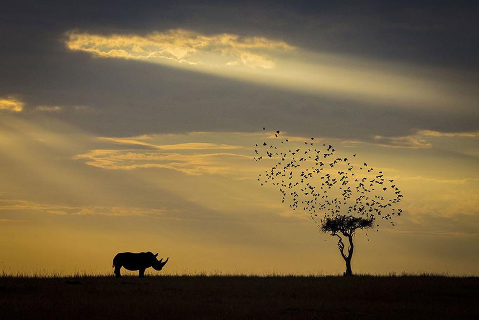 Bóng tê giác, Kenya - giải Danh dự hạng mục Động vật trong môi trường sống
