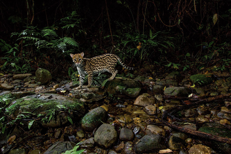 Hoàng Liên Sơn - điểm du lịch đáng đến 2019 của National Geographic - Ảnh 14.
