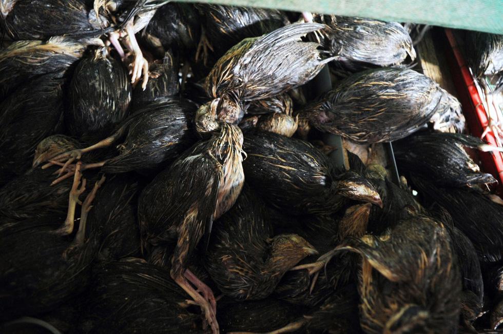 Dân khóc nghẹn nhìn gà vịt chết chìm trong nước - Ảnh 13.