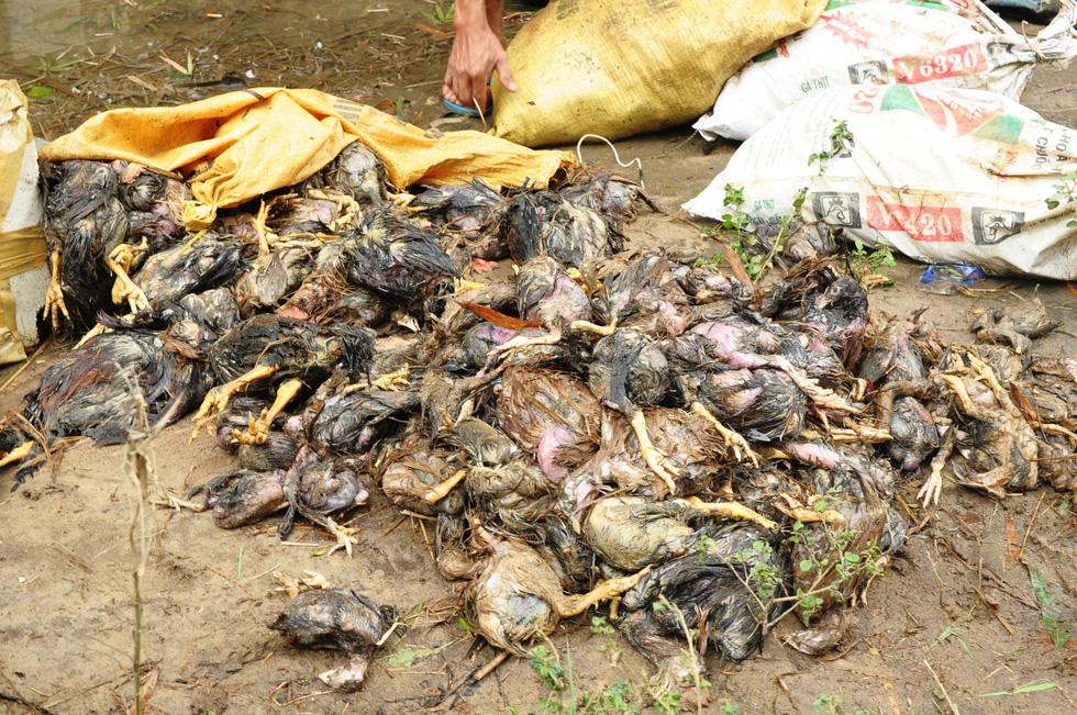 Dân khóc nghẹn nhìn gà vịt chết chìm trong nước - Ảnh 8.