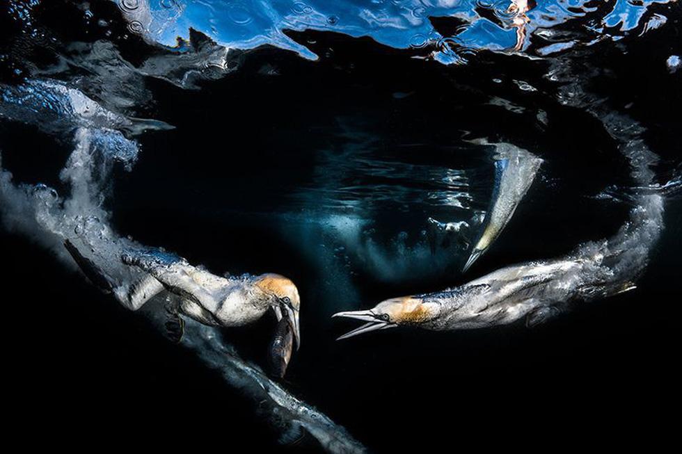 Những bức ảnh thiên nhiên và khoa học đẹp nhất năm - Ảnh 12.