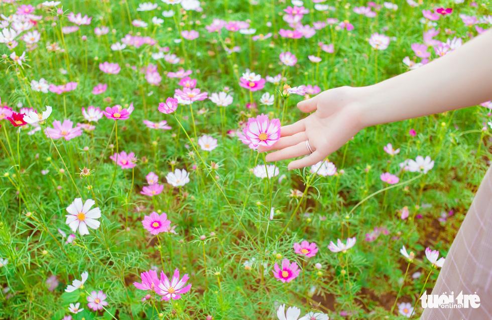 Lạc bước giữa cánh đồng hoa hướng dương ở Nghệ An - Ảnh 12.