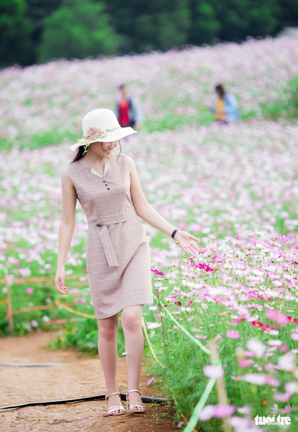 Lạc bước giữa cánh đồng hoa hướng dương ở Nghệ An - Ảnh 13.