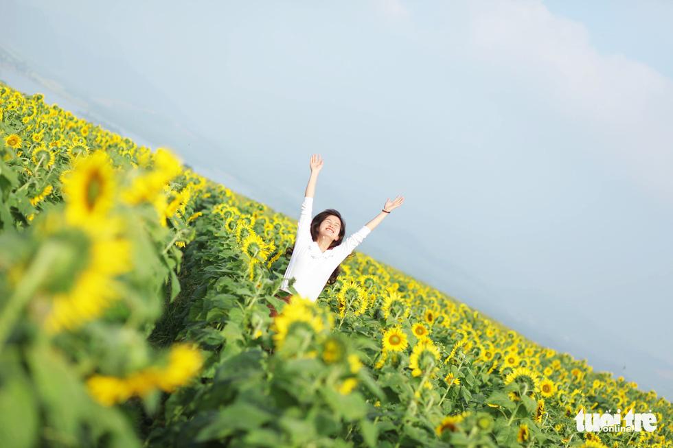 Lạc bước giữa cánh đồng hoa hướng dương ở Nghệ An - Ảnh 7.