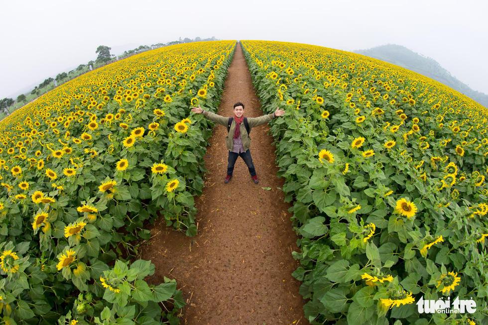 Lạc bước giữa cánh đồng hoa hướng dương ở Nghệ An - Ảnh 11.