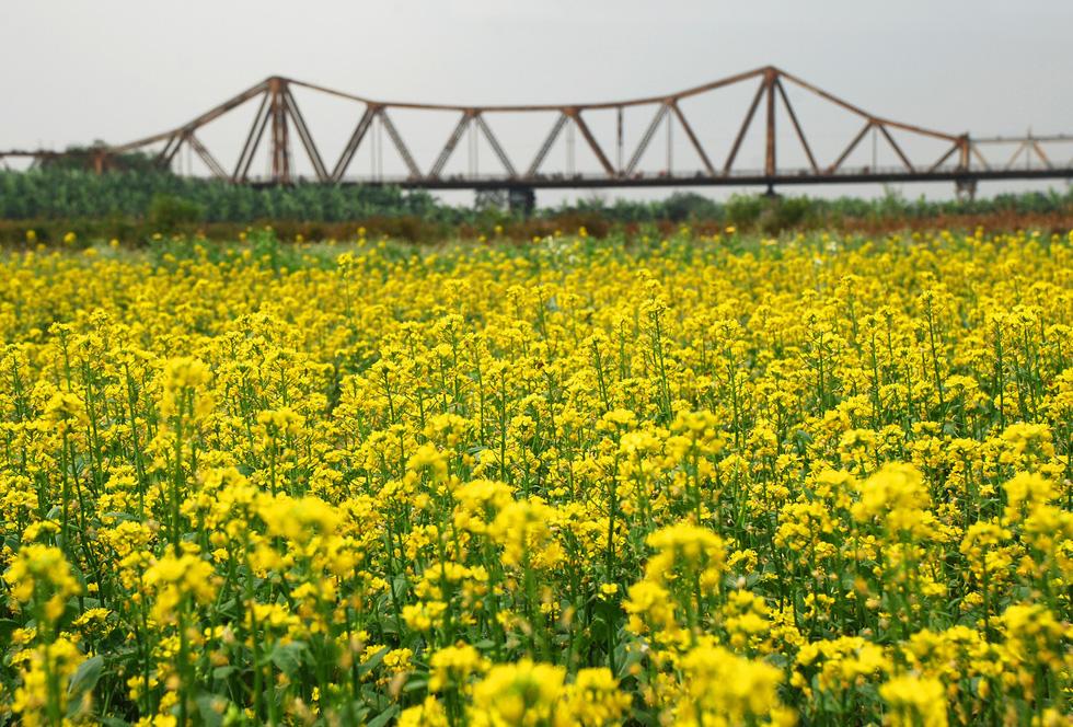Phút chùng lòng cuối năm, rưng rưng nhớ những mùa hoa Hà Nội - Ảnh 19.