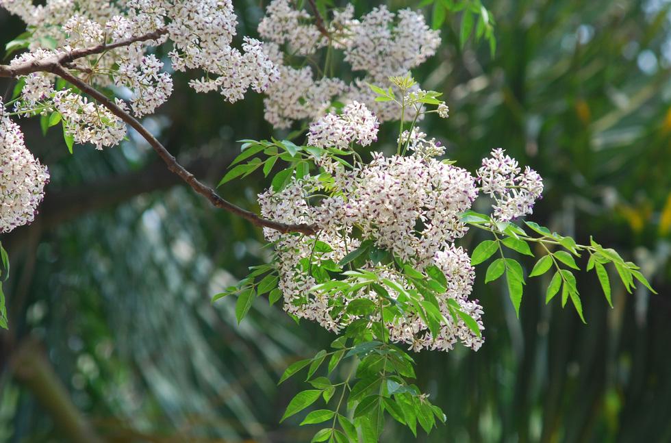 Phút chùng lòng cuối năm, rưng rưng nhớ những mùa hoa Hà Nội - Ảnh 8.
