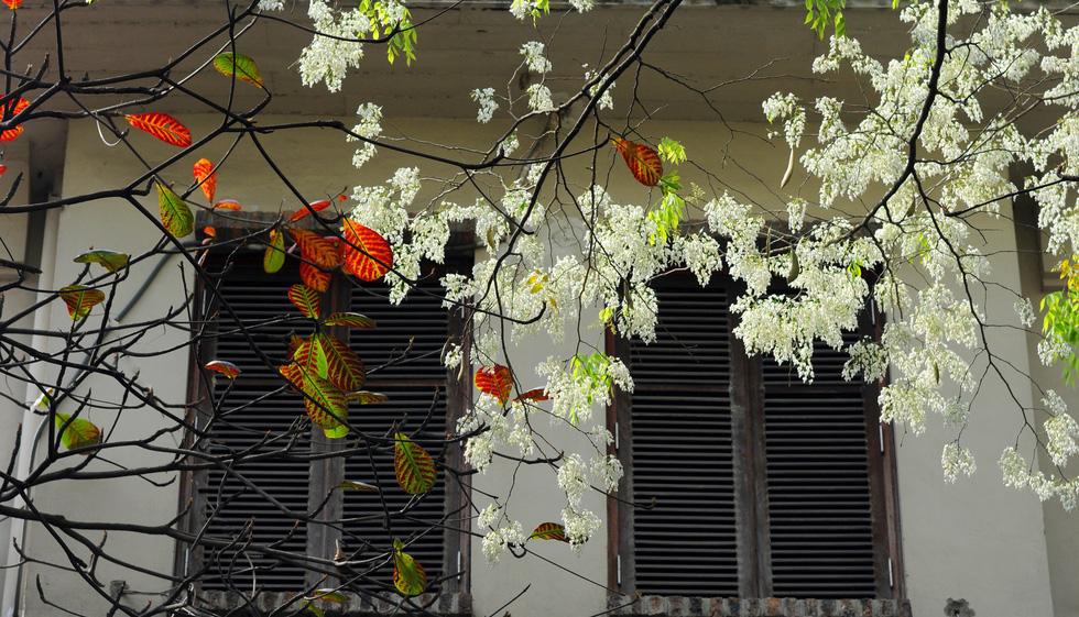 Цветочные сезоны Ханоя (ФОТО)