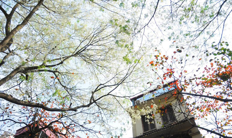 Phút chùng lòng cuối năm, rưng rưng nhớ những mùa hoa Hà Nội - Ảnh 6.
