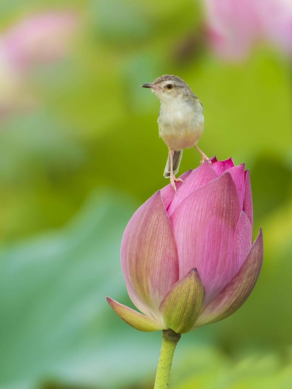 Phút chùng lòng cuối năm, rưng rưng nhớ những mùa hoa Hà Nội - Ảnh 12.