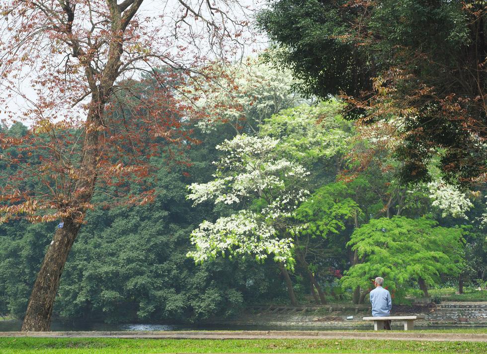 Phút chùng lòng cuối năm, rưng rưng nhớ những mùa hoa Hà Nội - Ảnh 7.