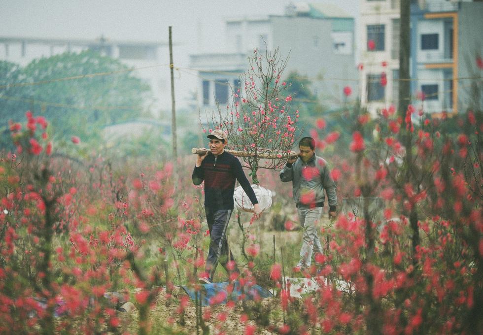 Phút chùng lòng cuối năm, rưng rưng nhớ những mùa hoa Hà Nội - Ảnh 3.