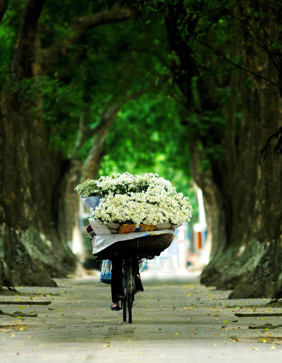 Phút chùng lòng cuối năm, rưng rưng nhớ những mùa hoa Hà Nội - Ảnh 15.