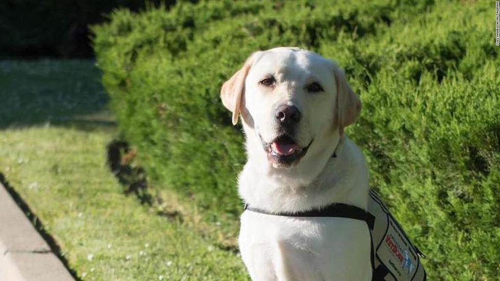 Xúc động hình ảnh chú chó Sully trung thành của ông Bush 'cha' - Ảnh 13.