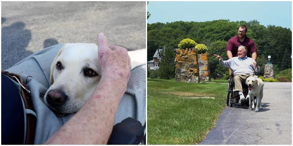 Xúc động hình ảnh chú chó Sully trung thành của ông Bush 'cha' - Ảnh 7.