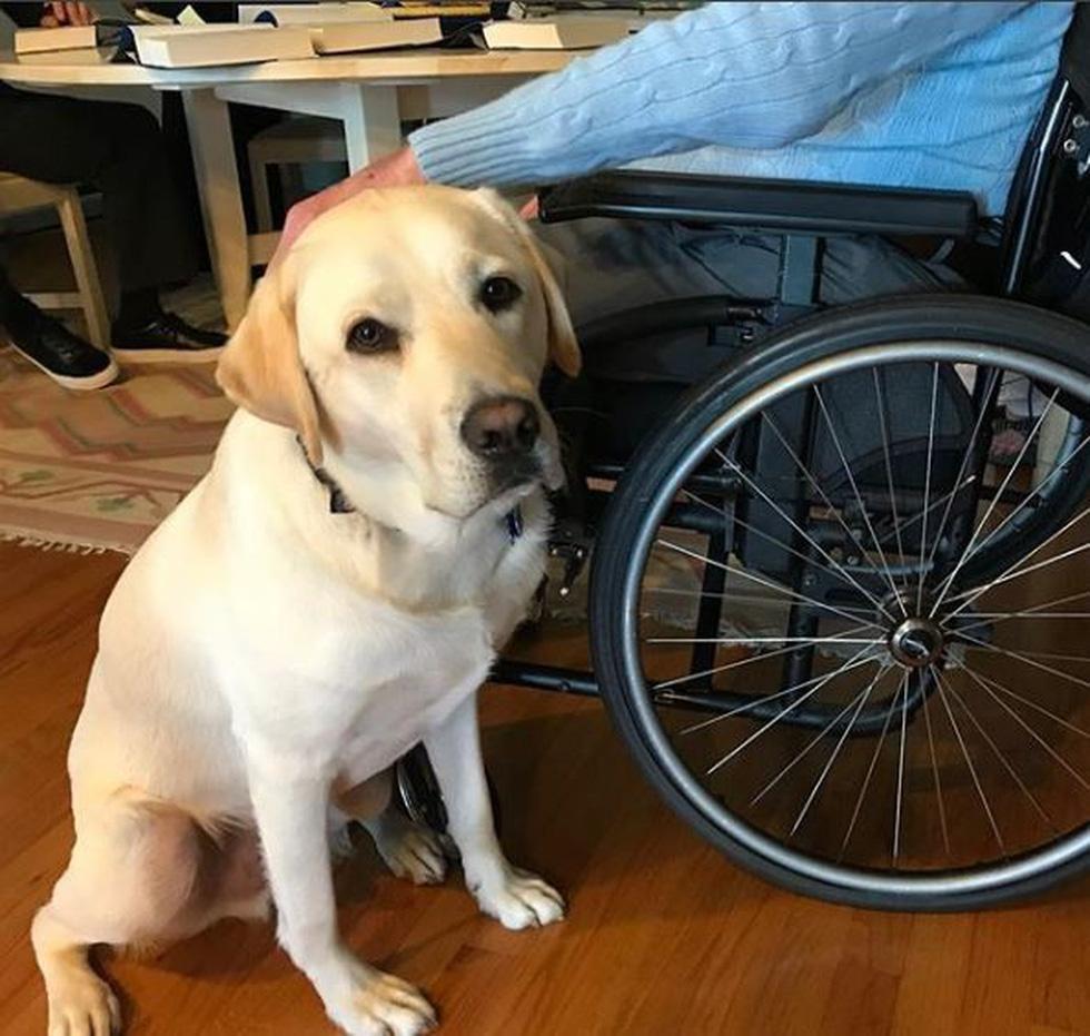 Xúc động hình ảnh chú chó Sully trung thành của ông Bush 'cha' - Ảnh 9.