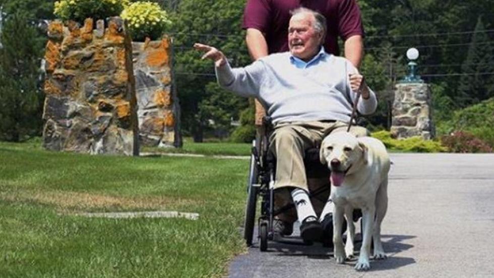 Xúc động hình ảnh chú chó Sully trung thành của ông Bush 'cha' - Ảnh 8.