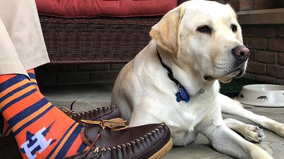 Xúc động hình ảnh chú chó Sully trung thành của ông Bush 'cha' - Ảnh 12.