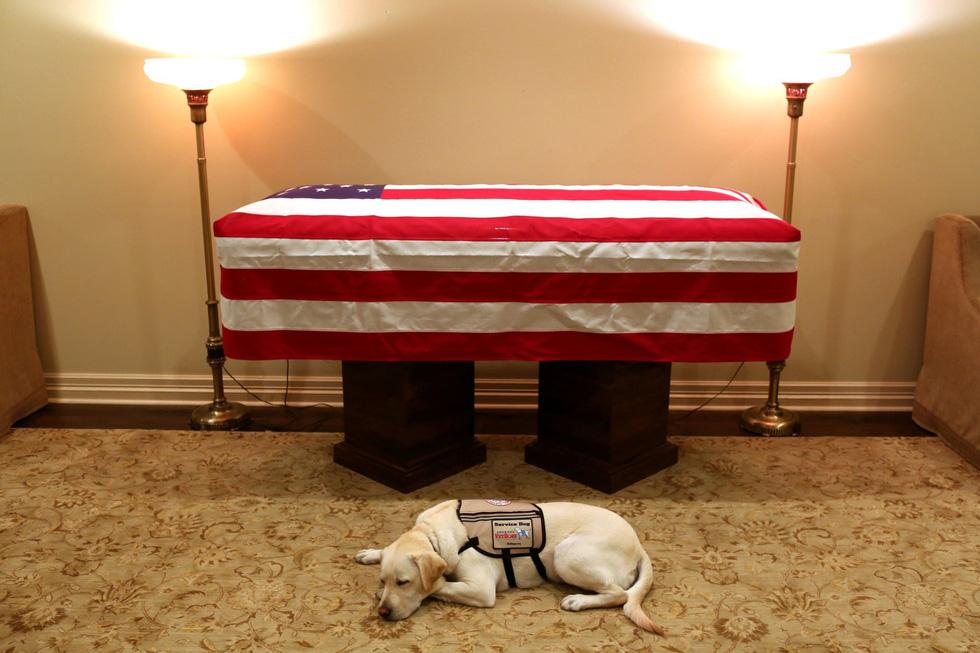 Xúc động hình ảnh chú chó Sully trung thành của ông Bush 'cha' - Ảnh 1.