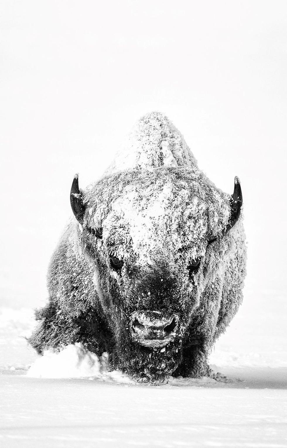 Ngắm ảnh ấn tượng cuộc thi National Geographic Photo Contest 2018 - Ảnh 2.