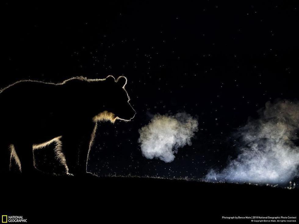 Ngắm ảnh ấn tượng cuộc thi National Geographic Photo Contest 2018 - Ảnh 18.